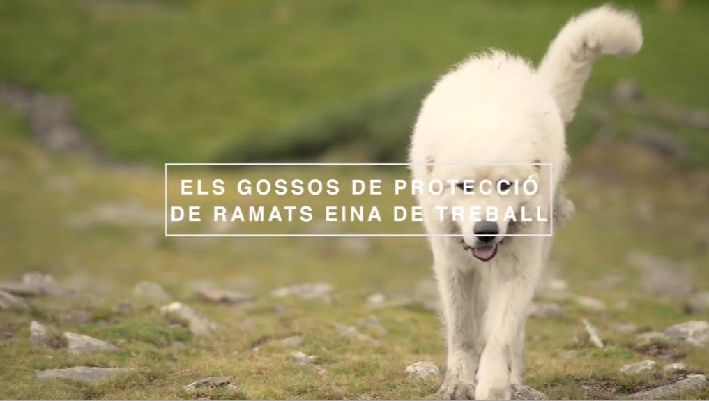 Els gossos de protecció de ramats eina de treball